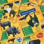 Сундучок Знаний: В мире животных